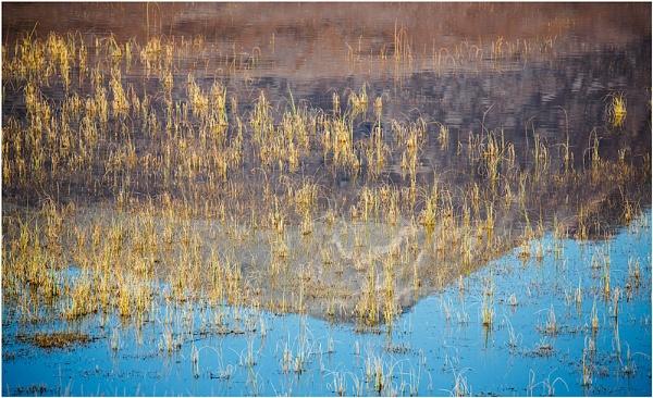 Golden Reeds... by Scottishlandscapes