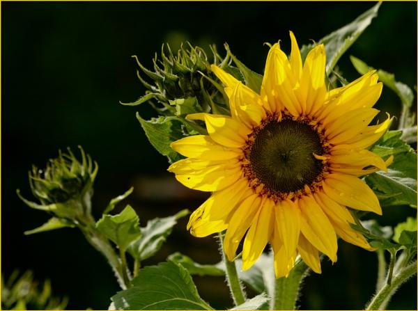 sunshine by Mavis