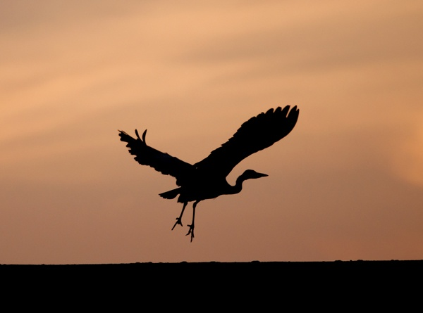 Lift Off by Ingleman