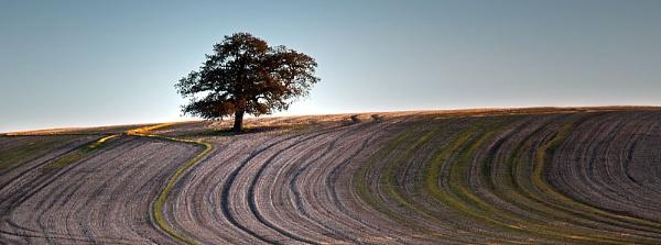 Tree on a Hill by SandraKay