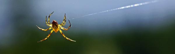 "\""Spider - Tarzan\"" by WinFred"
