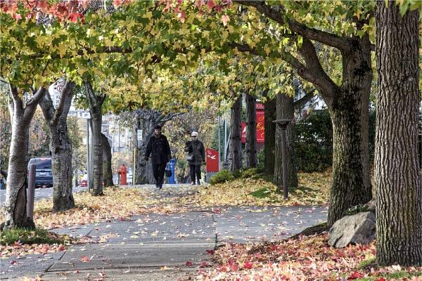 Falling Leaves by Daisymaye