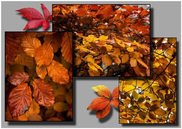 Autumn Variations II. by Niknut