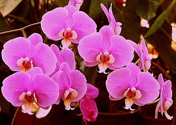 Orchid by bglimaye