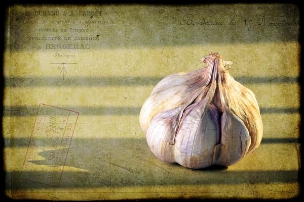 French Garlic by trahern