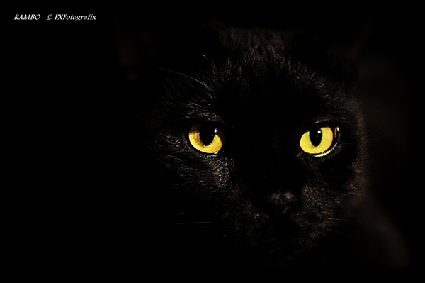 Rambo the cat .... by MTFernandes