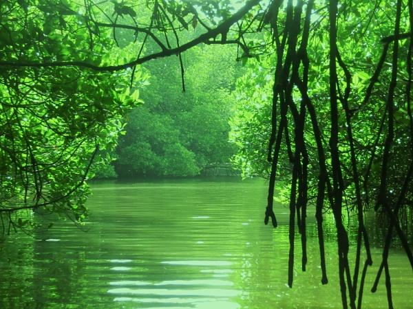 Natural green... by Chinga