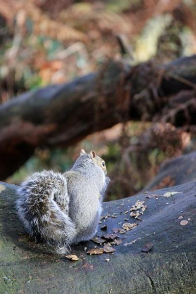 Squirrel by breakawayfromme