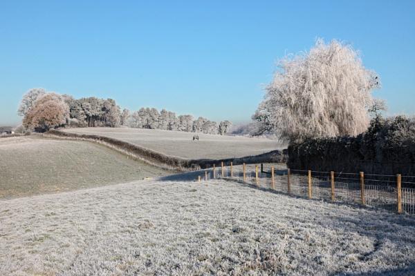 Winter Morning by Nigel7