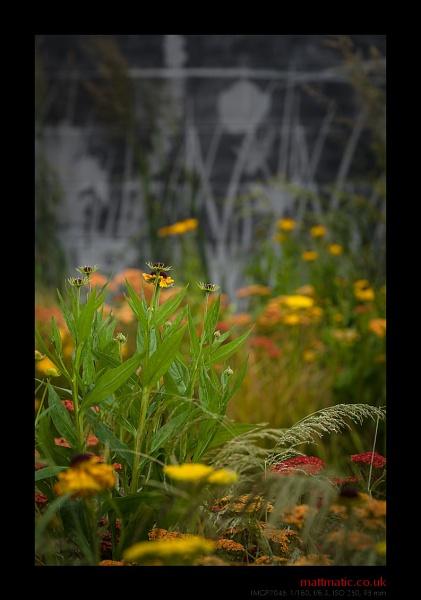 Urban Garden (RHS/HC) by mattmatic