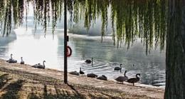 Photo : Riverbank
