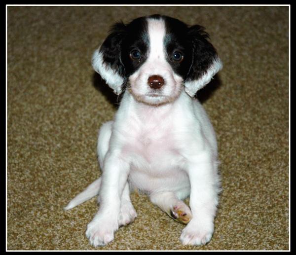 Missy my new puppy by scarjam