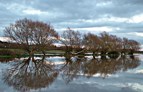 Flooded Trees by MidnightMaya