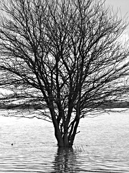 Floods by MidnightMaya