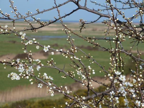 Blossom over Blakeney Freshes by Meheecho