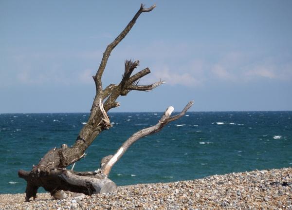 Beach Tree by Meheecho