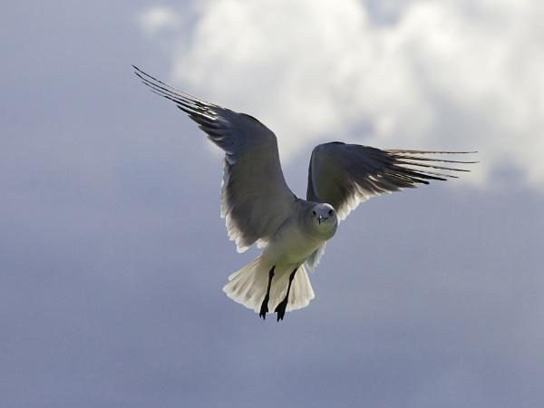 Passion Island Bird - Mexico by StephenBrighton