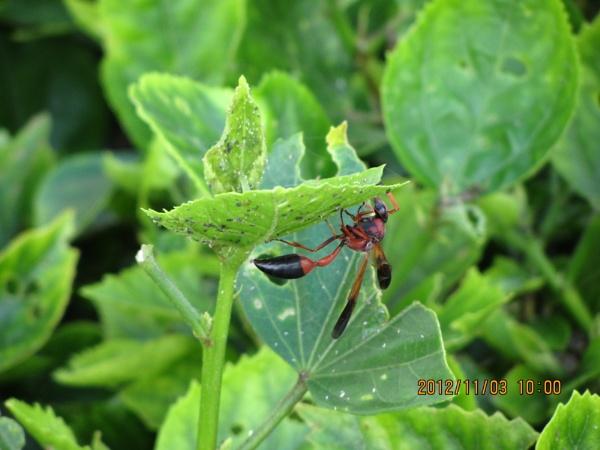 caterpillar wasp Lanzarote by mio2mio