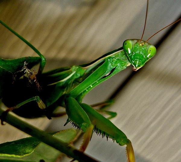another green exoskeletalien by fotoboy