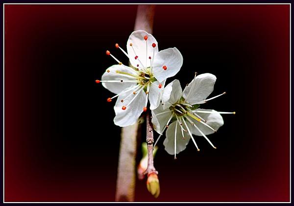 wild flower by johnjones