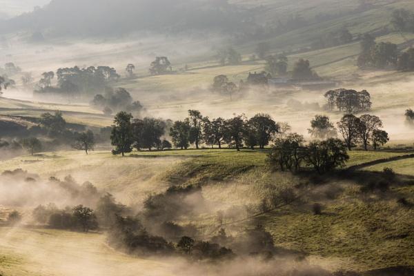 Misty Dove by jamesgrant