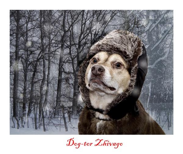 Dog-tor Zhivago by shanelaze