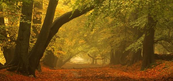 Misty Autumn at Ashridge by hammermad