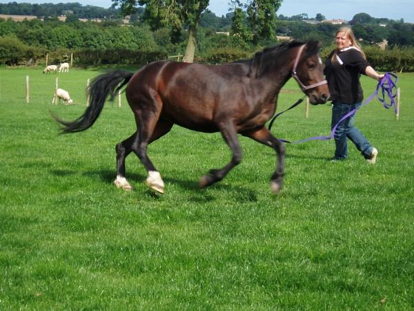 gallop lunge by megan99