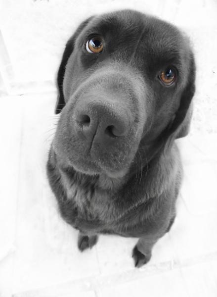 Dog eyes ;) by Monnika