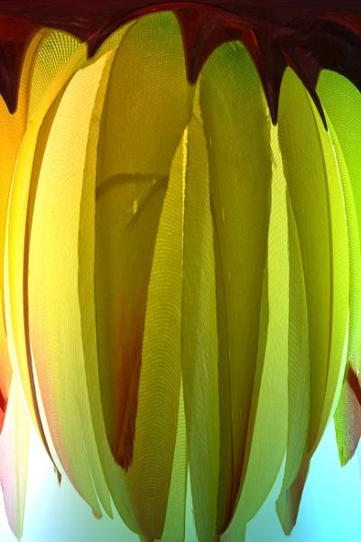 Bananas petal style by Mototaur