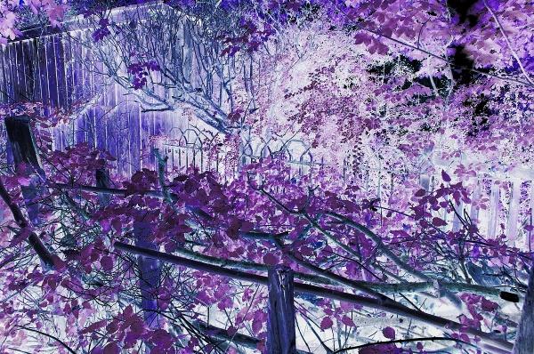 Blue Boy Meets Purple Heart by Ploughman