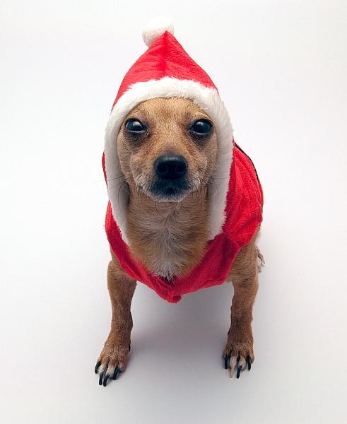 MERRY RUDDY CHRISTMAS!!! by THIRTYFIVEMILL