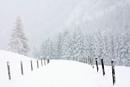 December Wonderland Road