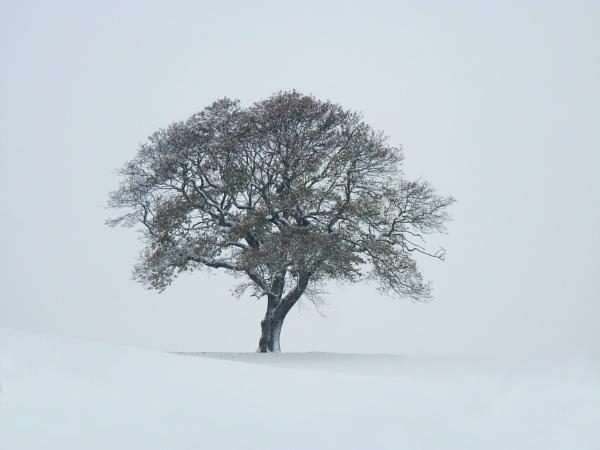 Lone tree in winter by Ian Pratt