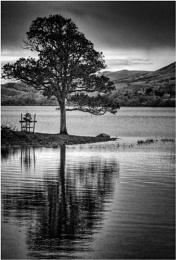 Bassenthwaite Tree in Mono