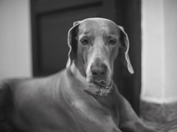 Lady Leica by jak_r