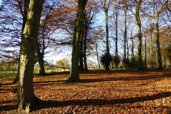 Autumn carpet by vulcan