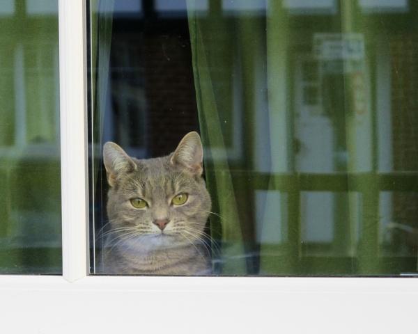 Neighbourhood Watch by StephenBrighton