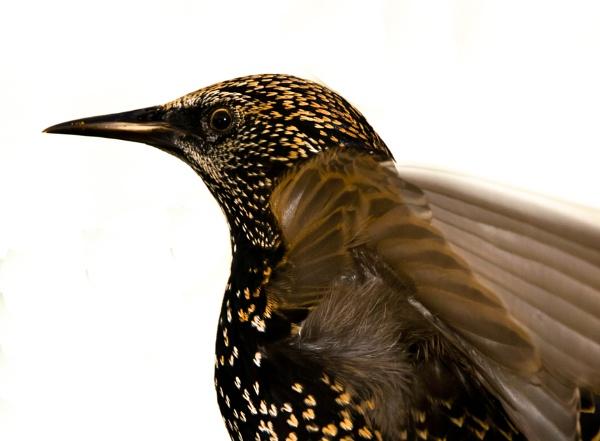 bird portrait by cornish_chris