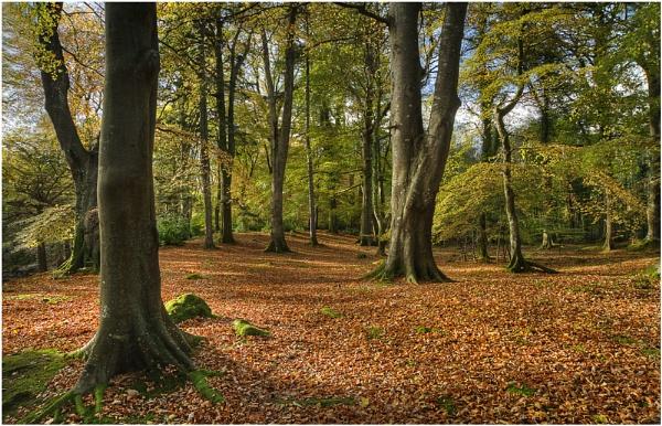 Woodland by bombolini