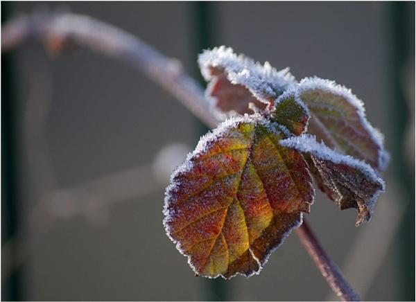 Frosty Flora