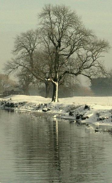 Winter Trees by gardenersteve