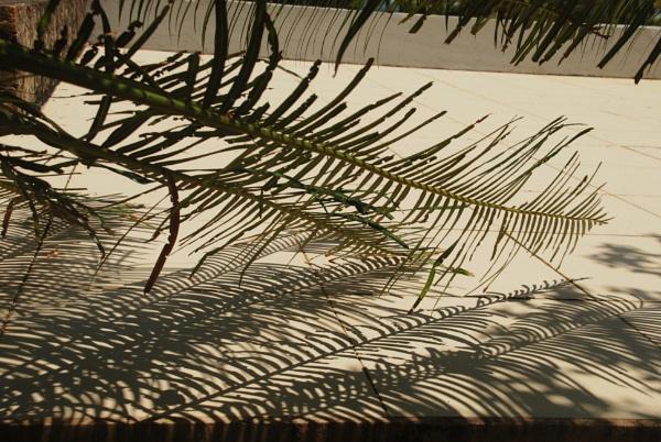 Shadows 1 by Chinga