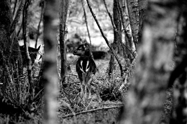 Bambi by breakawayfromme