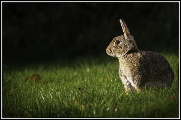 Dawn Rabbit by ANNIEKERR
