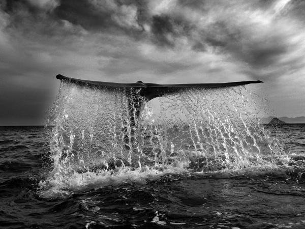 Dive of a Levithan by ALAN_H