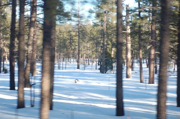 Snow in Arizona by Hmccdc