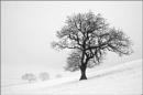 Winter Blanket