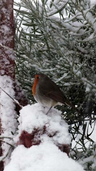 white christmas by kevlense