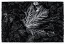 Leaf by Nikonuser1